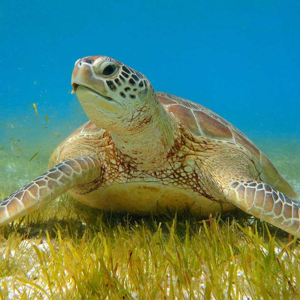 Snorkelling Komandoo Maldives